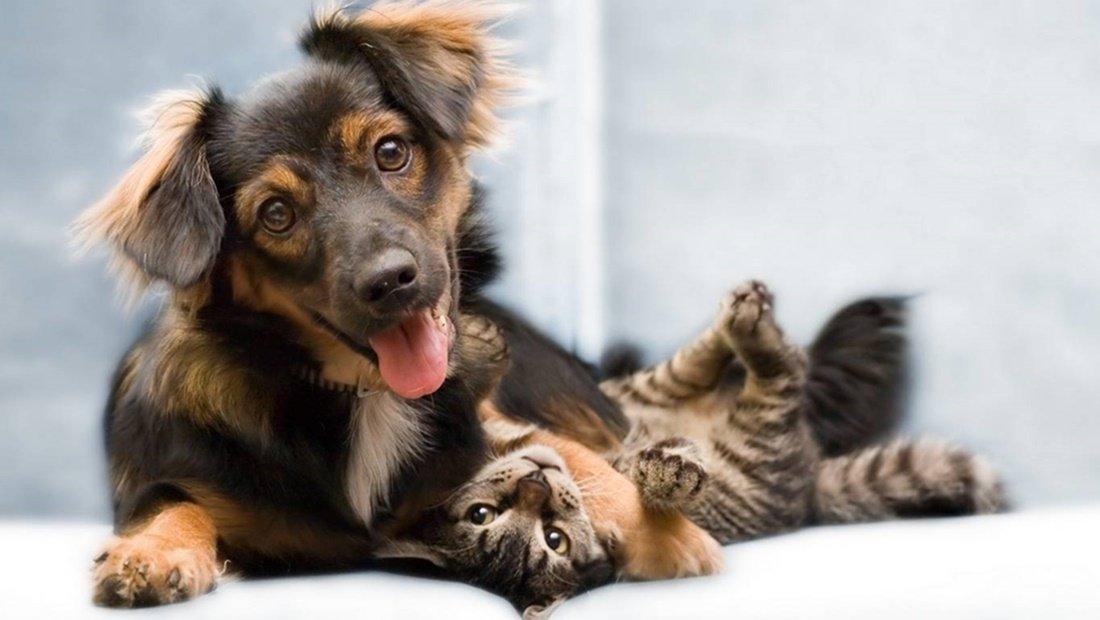 Estrés en gatos y perros