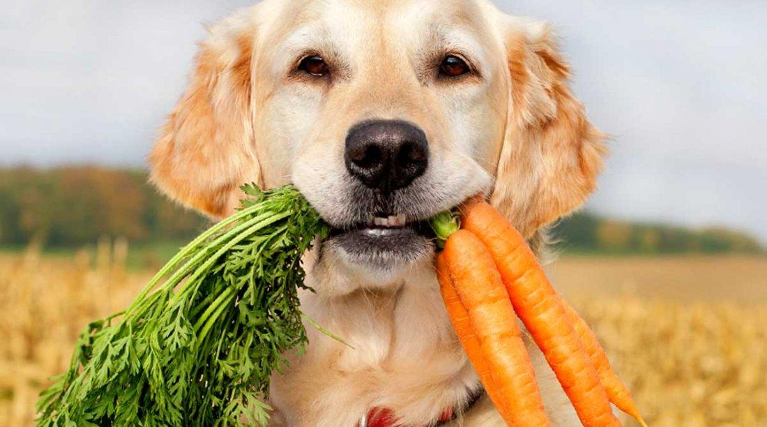 Verduras y Frutas buenas para tu Can