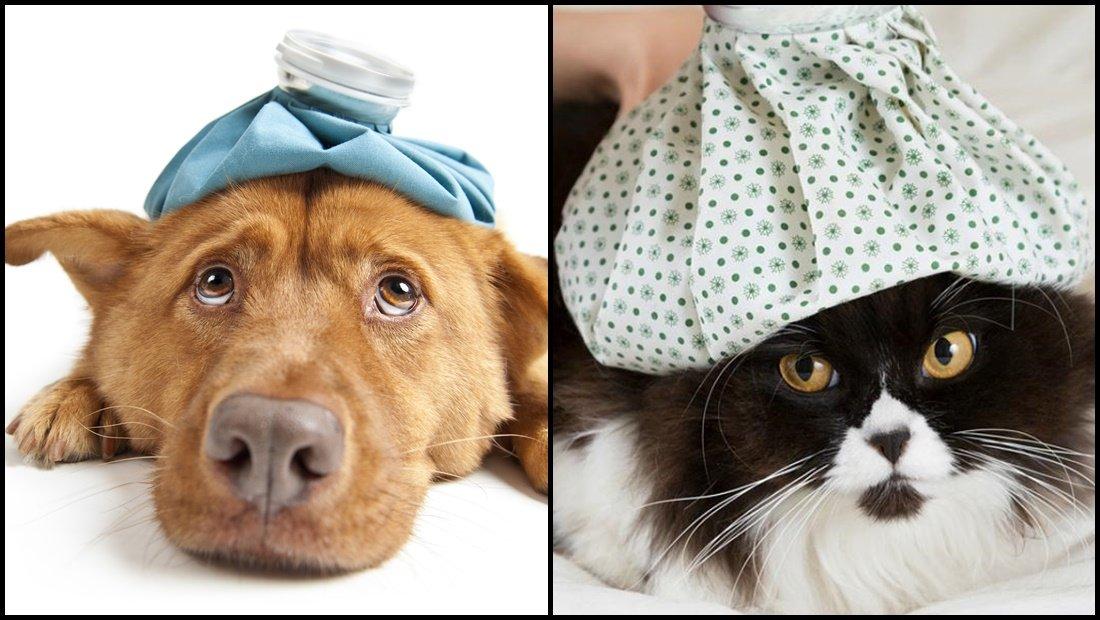 La diabetes en nuestros perros y gatos