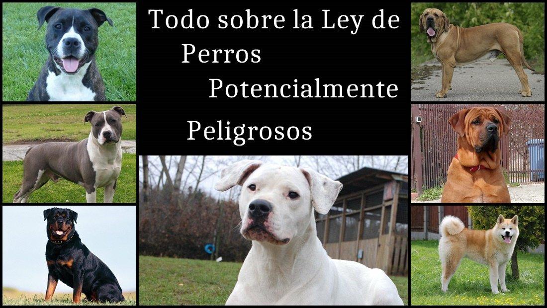 Todo Sobre La Ley De Perros Potencialmente Peligrosos