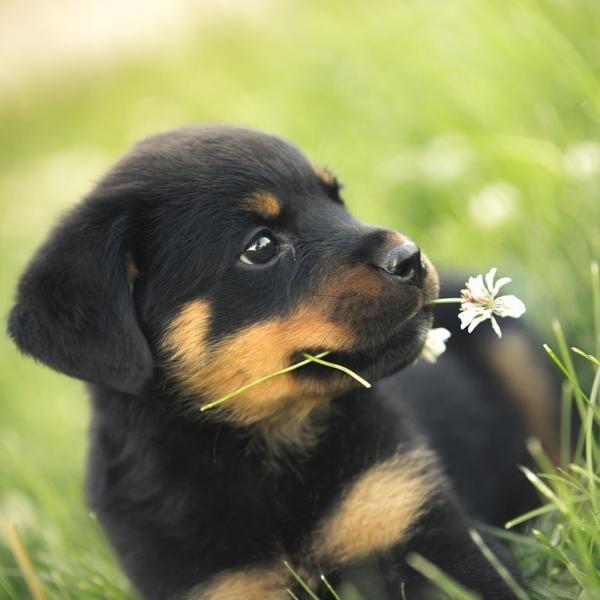 Educar a mi cachorro para que deje de morder