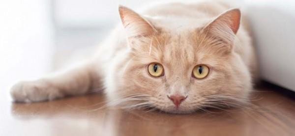Cuidados de un gato anciano