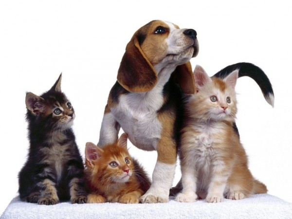Parásitos en mascotas en invierno
