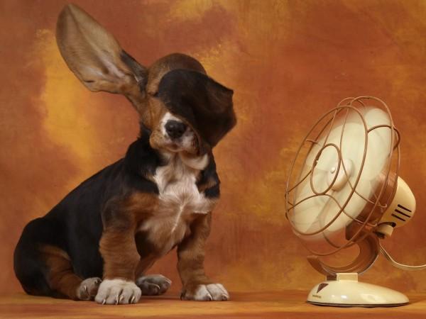 El Calor y su efecto en nuestros peluditos