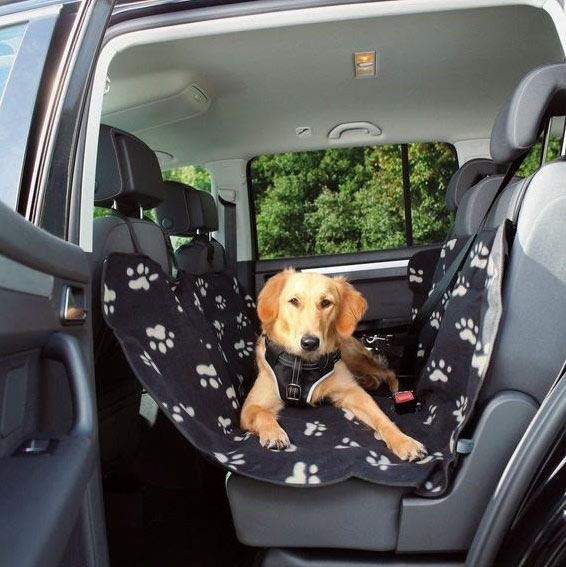 otro-perro-viajando-en-coche